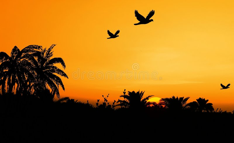 Download Safari stock image. Image of shadow, view, oasis, landscape - 200441