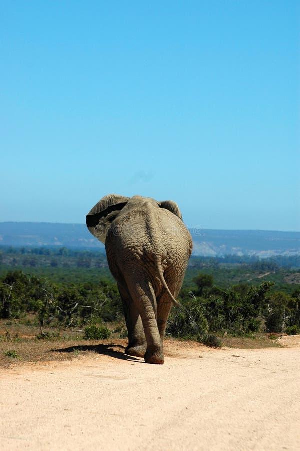 On safari stock image