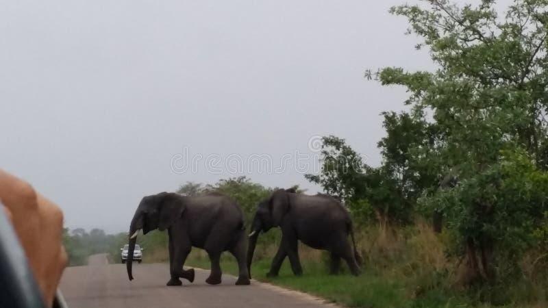 safari immagine stock