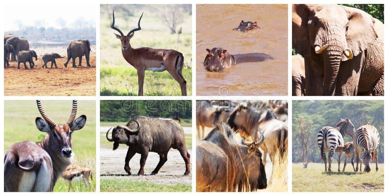 safari foto de archivo libre de regalías