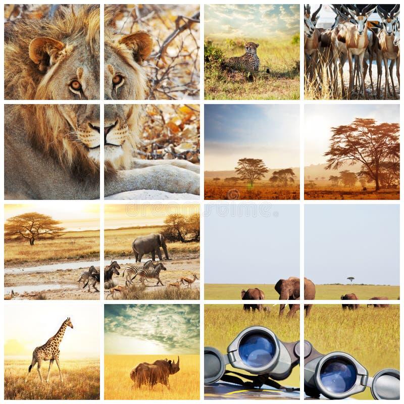 safari imagenes de archivo