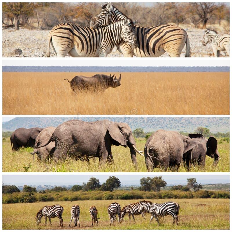 safari fotografía de archivo libre de regalías
