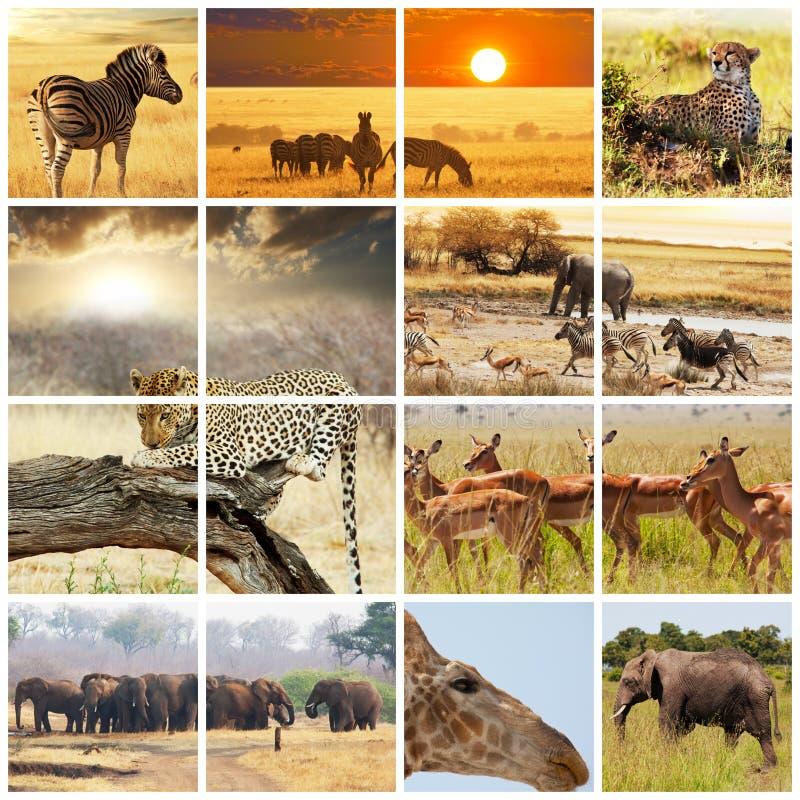 safari imagen de archivo