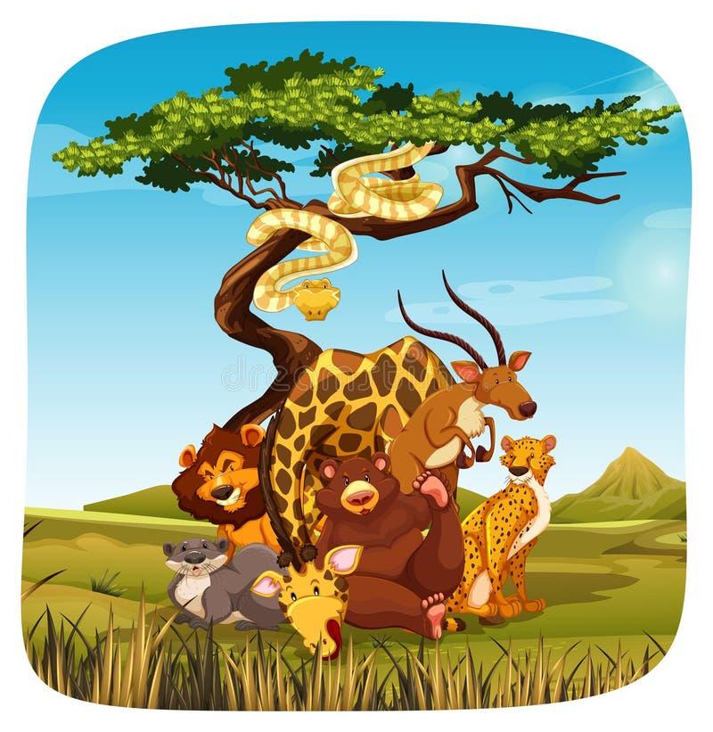 Download Safari illustrazione vettoriale. Illustrazione di background - 55365368