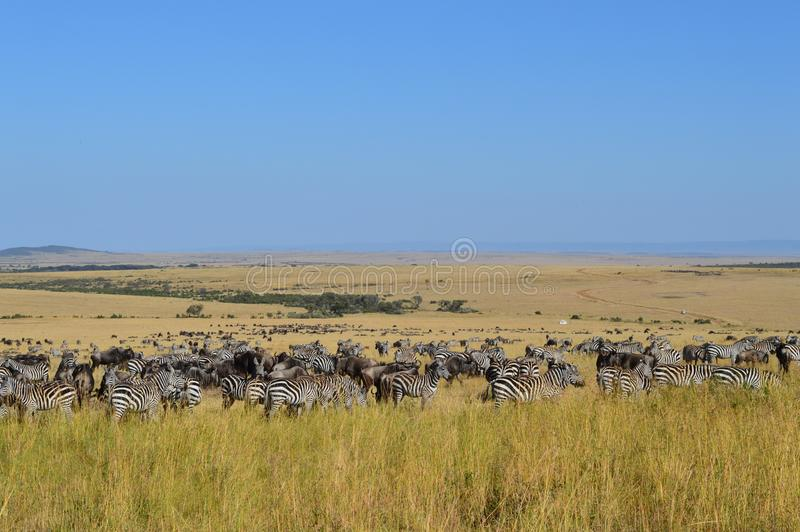 safari photographie stock