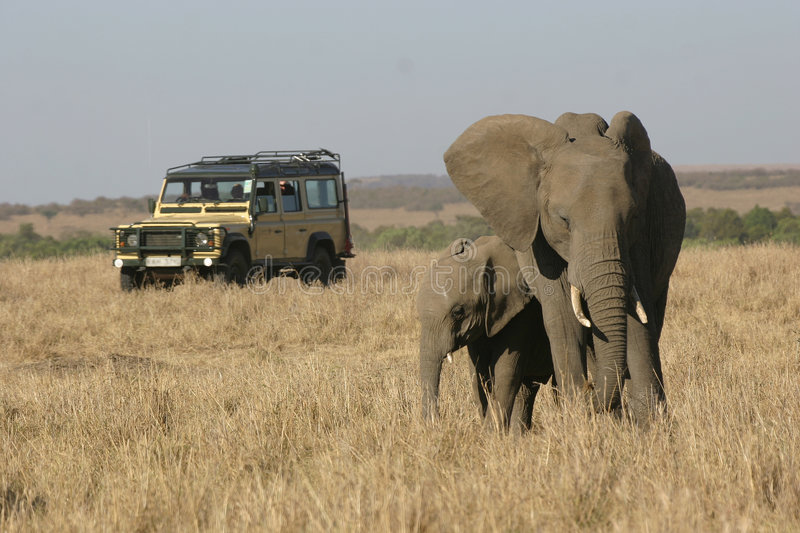 On Safari in Africa. Jeep with tourists watching African elephant mother and calf