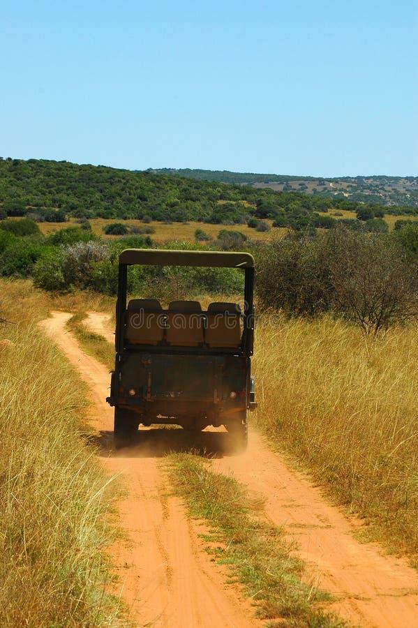 Safari africano fotografia stock libera da diritti