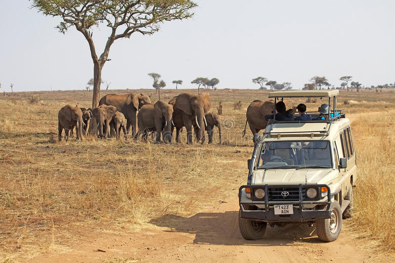 Safari africano immagini stock