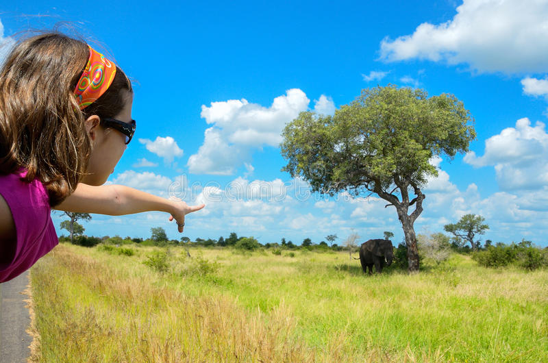 Safari in Afrika, Kind im Auto, das Elefanten zeigt lizenzfreies stockbild