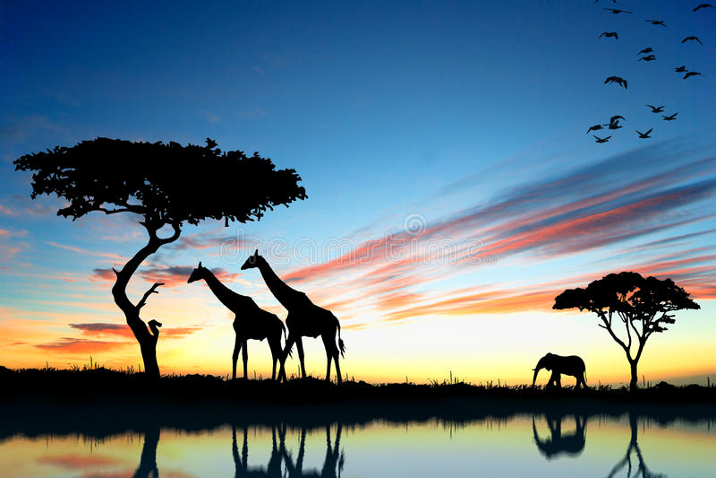 Safari in Afrika. Silhouet van wilde dierenbezinning in water stock fotografie