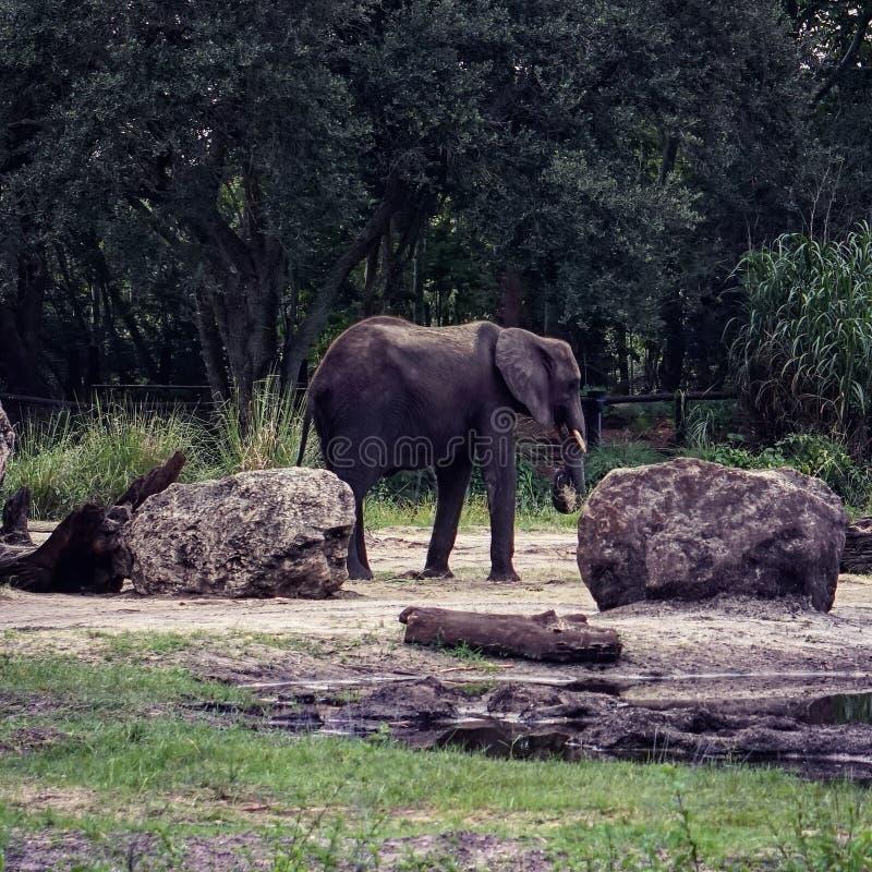 safari afrykańskiej fotografia stock
