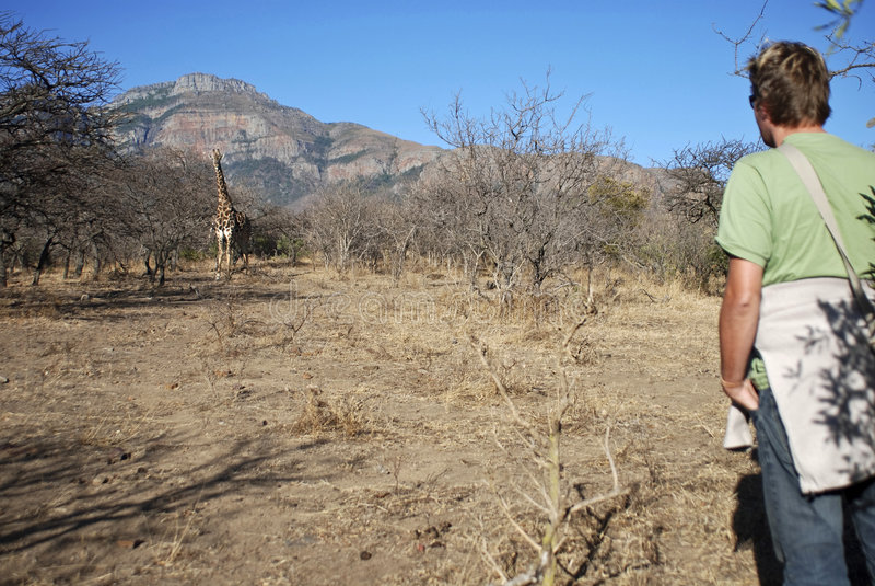 Safari ambulante fotografia stock