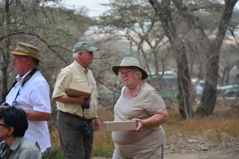 Safari americano Tanzânia do turista obeso fotos de stock