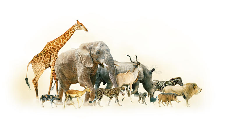 Safari Animals Walking Side Horizontal Banner royalty free stock photo