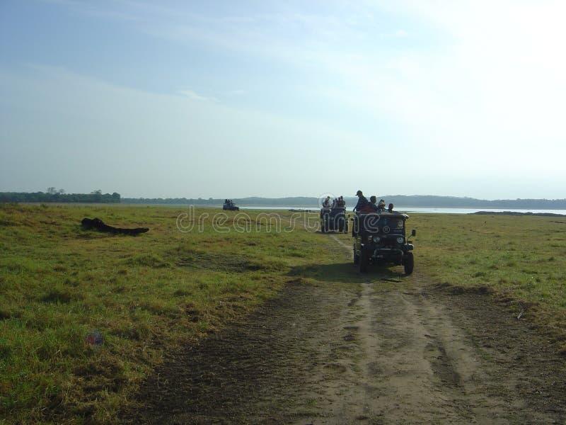 Safari bei dem Sonnenuntergang lizenzfreies stockbild