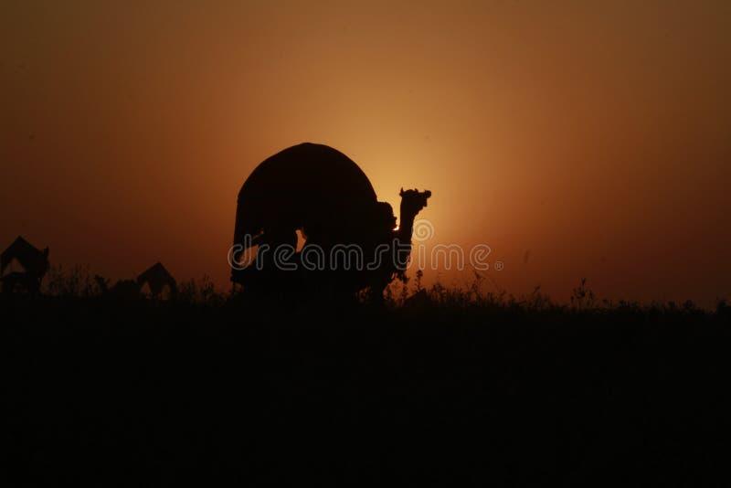 Safari com camelo e vagon imagens de stock