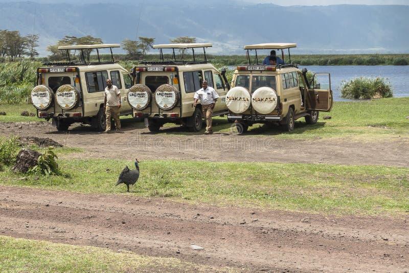 Safari in cratere di Nogorongoro fotografia stock