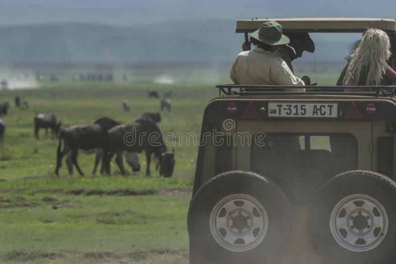 Safari in cratere di Nogorongoro immagini stock libere da diritti