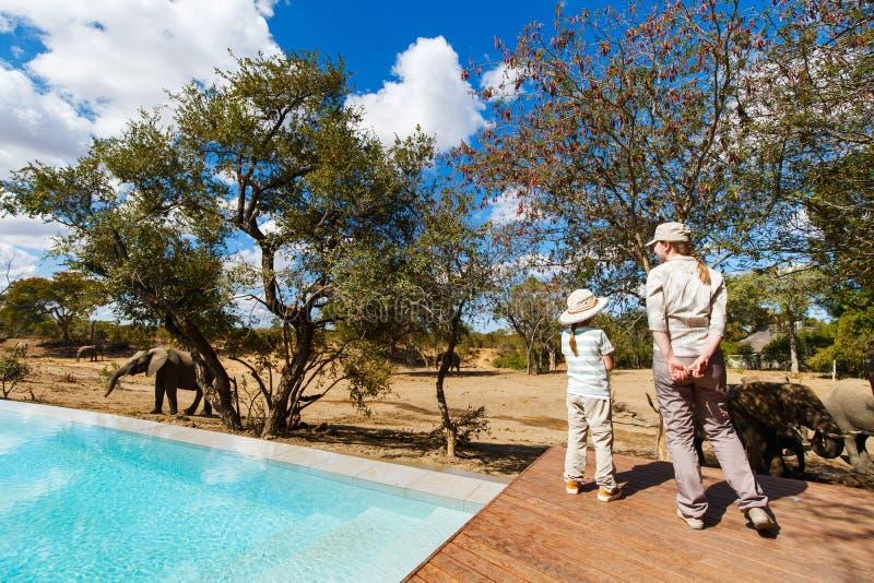 Safari de famille photo libre de droits