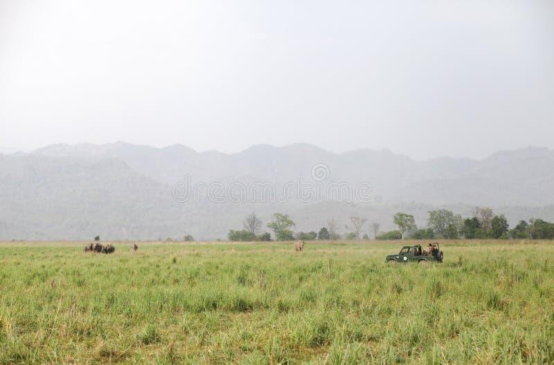 Safari de Jaeep en el prado hermoso de Dhikala imagen de archivo