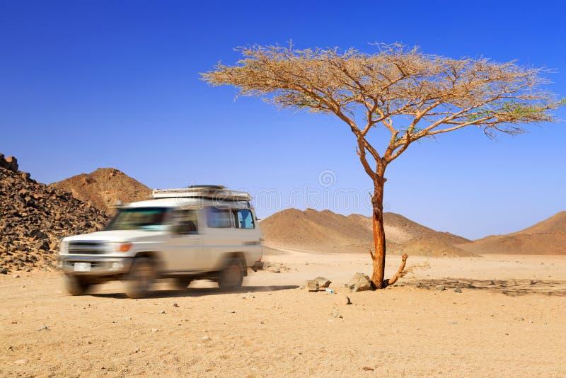 Safari de jeep sur le désert photos stock