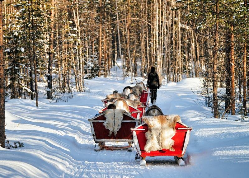 Safari de la caravana del trineo del reno con el bosque Laponia Finlandia septentrional de la gente imagen de archivo