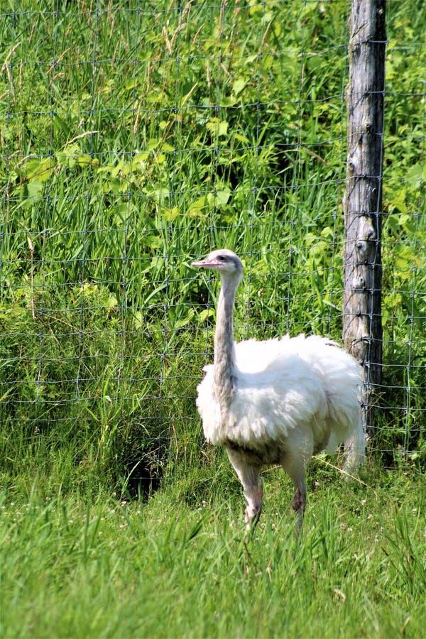 Safari de parc de Parc, Hemmingford, Québec, Canada images libres de droits