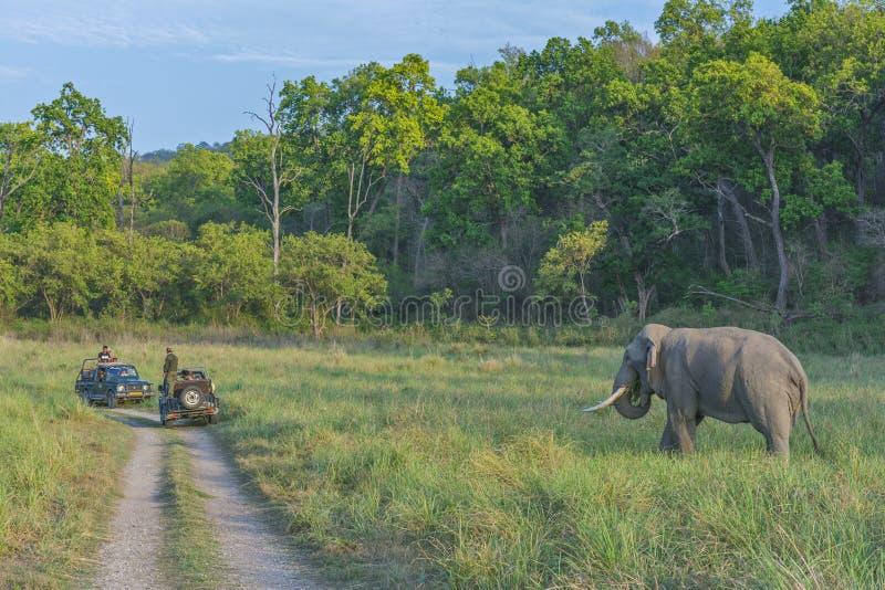 Safari de selva em Corbett National Park fotografia de stock royalty free