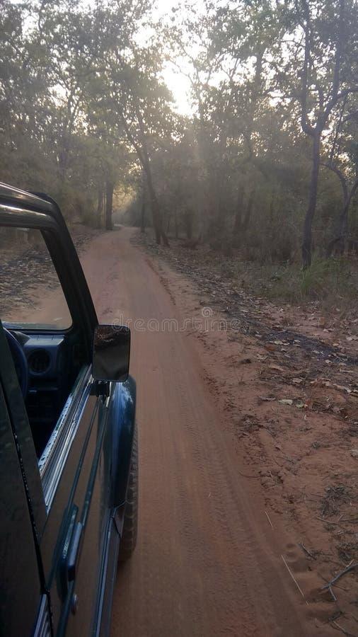 Safari del bosque en jeep abierto imagenes de archivo