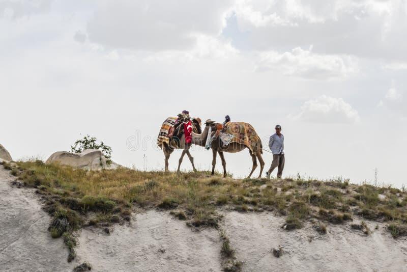 Safari del camello para los turistas en Cappadocia Paseos de los camellos alrededor de los valles hermosos y de las formaciones d imagen de archivo