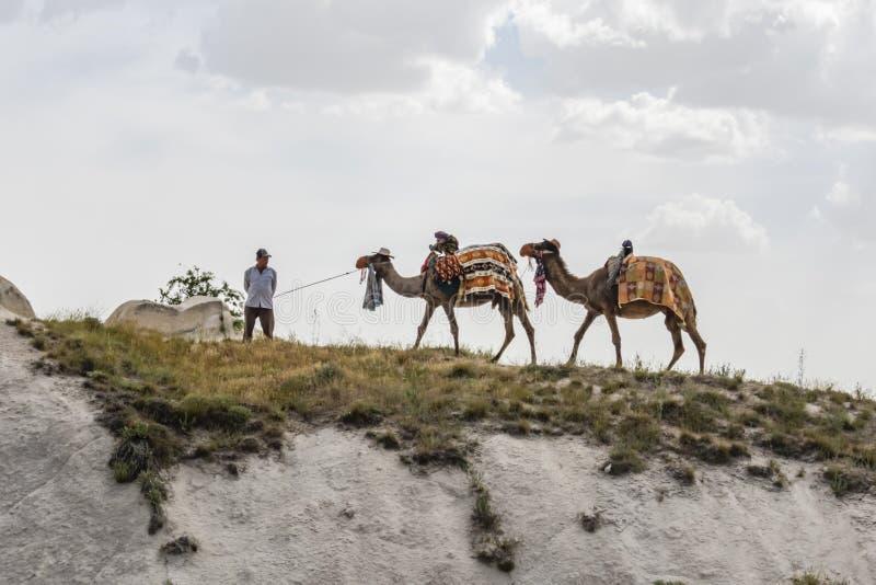 Safari del camello para los turistas en Cappadocia Paseos de los camellos alrededor de los valles hermosos y de las formaciones d fotografía de archivo libre de regalías