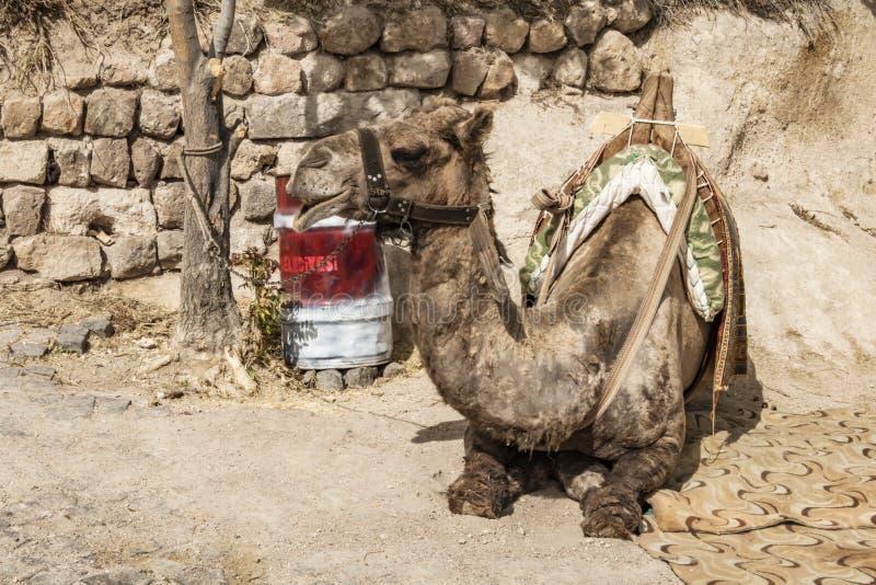 Safari del camello para los turistas en Cappadocia Paseos de los camellos alrededor de los valles hermosos y de las formaciones d fotos de archivo libres de regalías