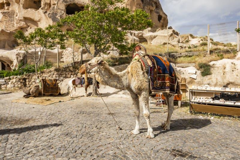 Safari del camello para los turistas en Cappadocia Paseos de los camellos alrededor de los valles hermosos y de las formaciones d foto de archivo