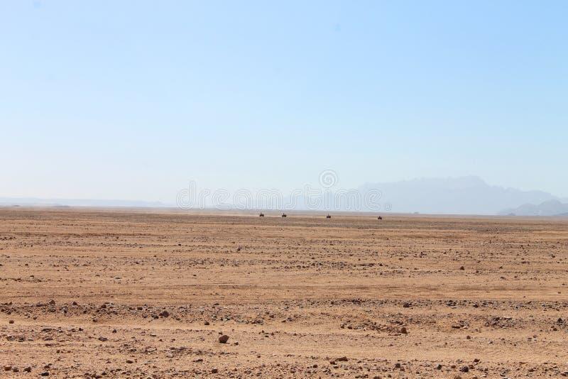 Safari del desierto imagen de archivo