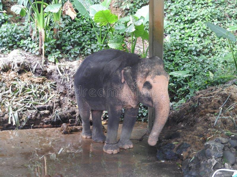 Safari del elefante en Dao Pak Park pintoresco en Tailandia imagen de archivo