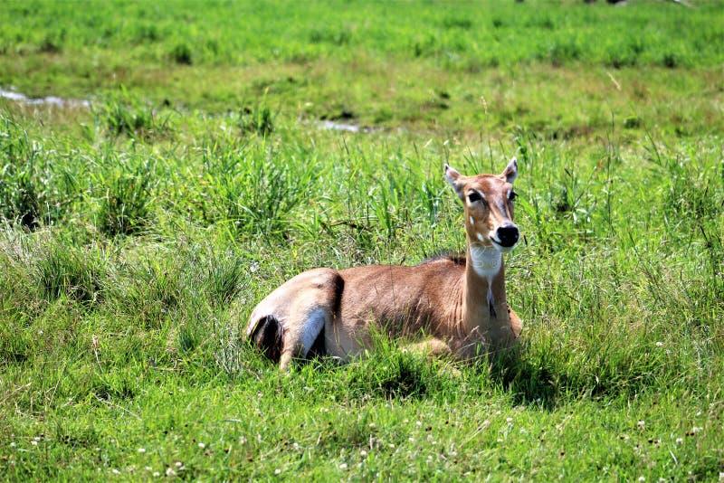 Safari del parco di Parc, Hemmingford, Quebec, Canada fotografia stock libera da diritti