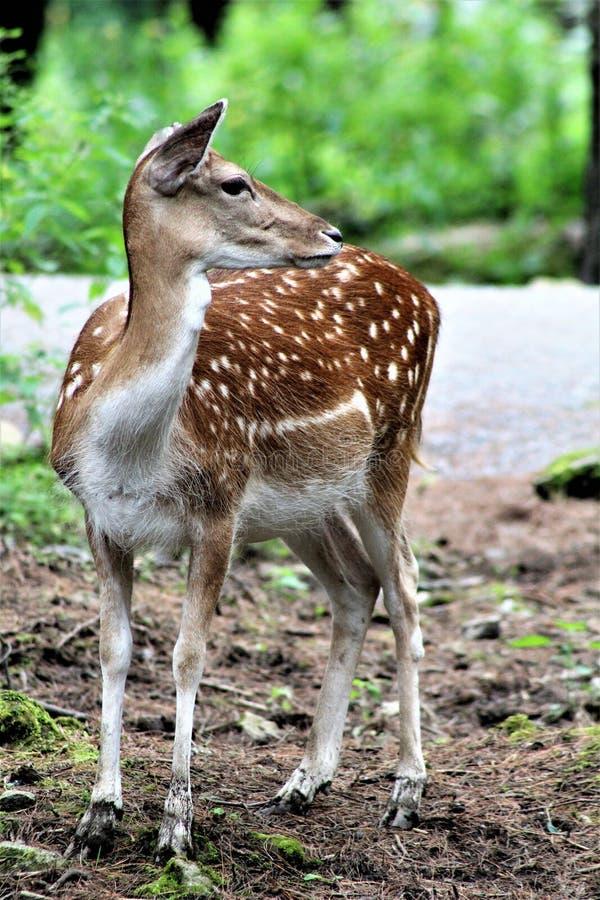 Safari del parco di Parc, Hemmingford, Quebec, Canada fotografia stock