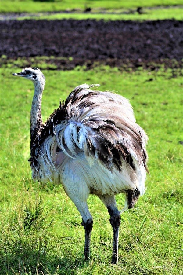 Safari del parco di Parc, Hemmingford, Quebec, Canada immagini stock libere da diritti
