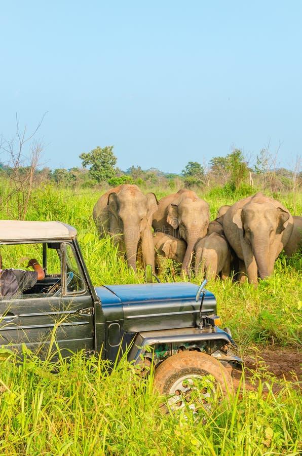 Safari dell'automobile con gli elefanti fotografia stock libera da diritti