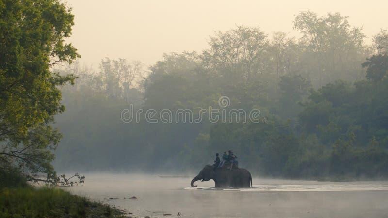Safari dell'elefante a Bardia, Nepal fotografia stock