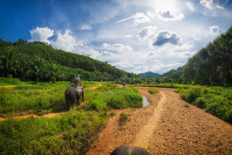 Safari dell'elefante in Tailandia immagine stock libera da diritti