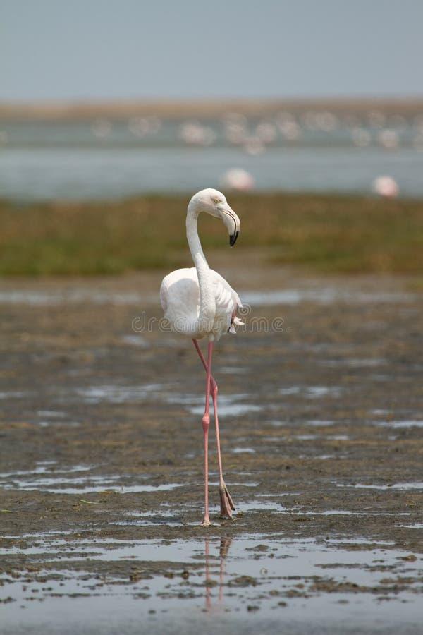 Safari dell'uccello fotografia stock