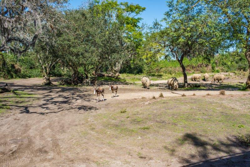 Safari di Kilimanjaro al regno animale a Walt Disney World fotografia stock
