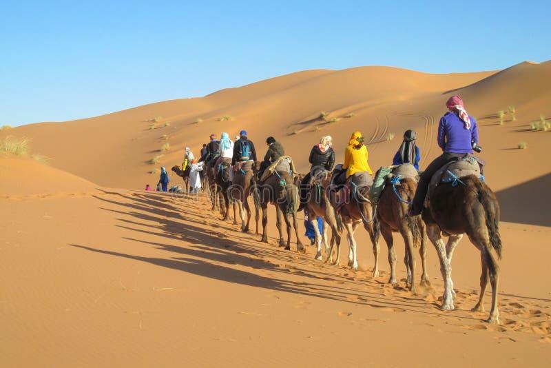 Safari do camelo no deserto da areia fotos de stock royalty free