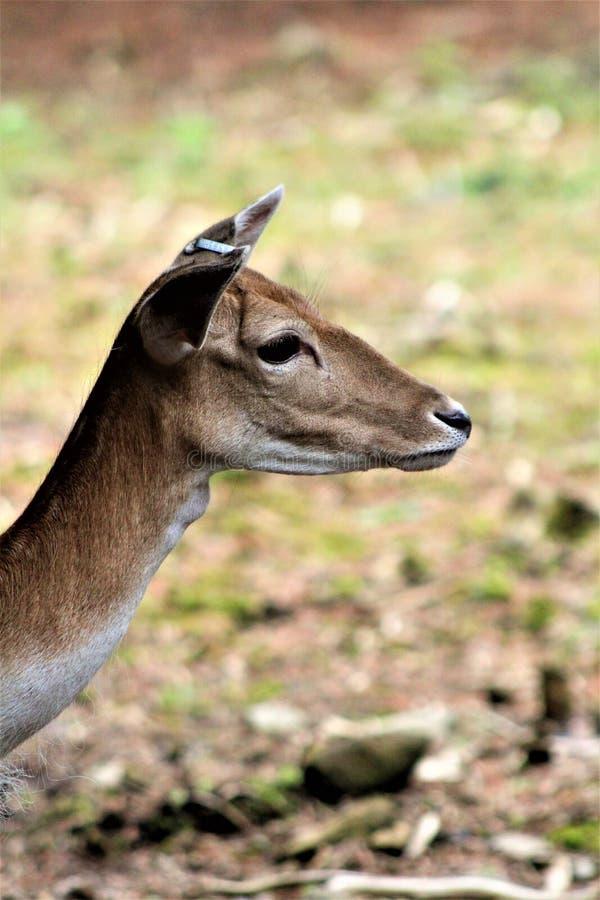 Safari do parque de Parc, Hemmingford, Quebeque, Canadá foto de stock royalty free