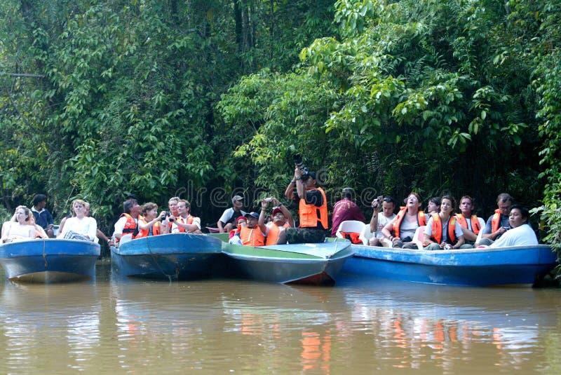 Safari do rio de Kinabatangan imagens de stock