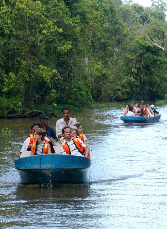 Safari do rio de Kinabatangan fotos de stock royalty free