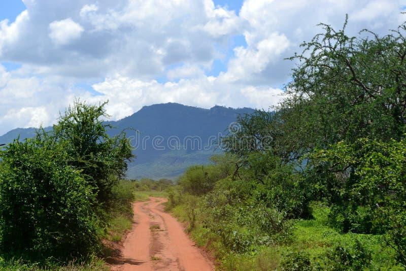 Safari du Kenya images libres de droits