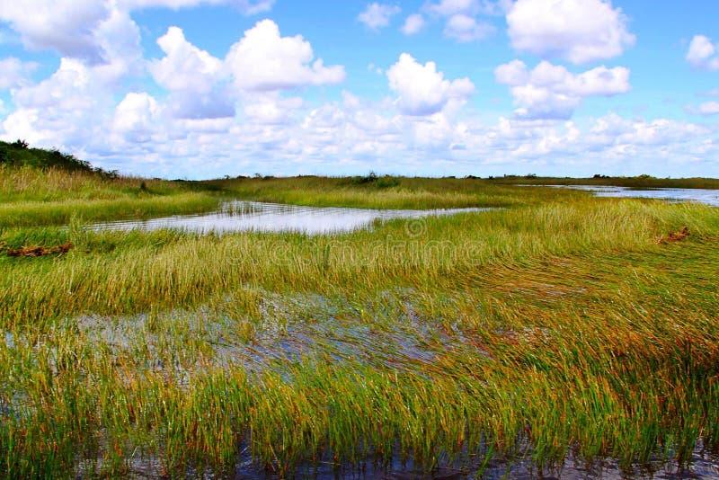Safari Edventure Miami Florida Härlig bakgrundsnature'sflod av gräs royaltyfri fotografi
