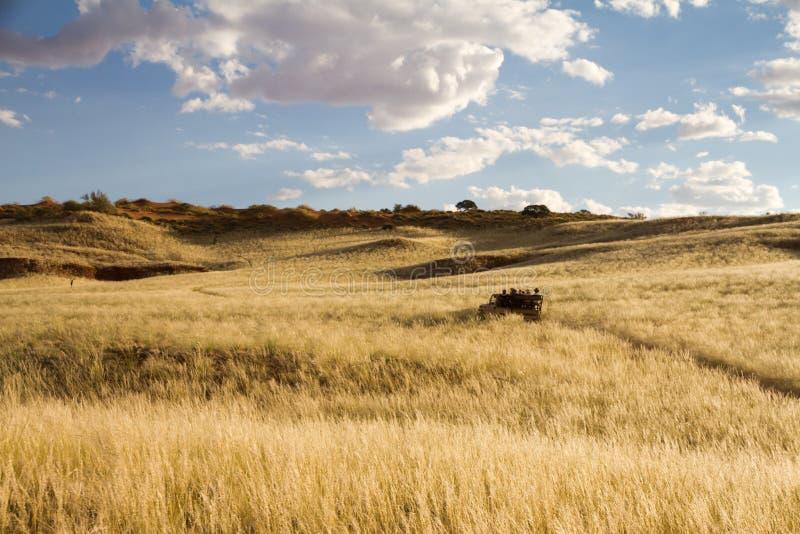 Safari em Namíbia imagens de stock